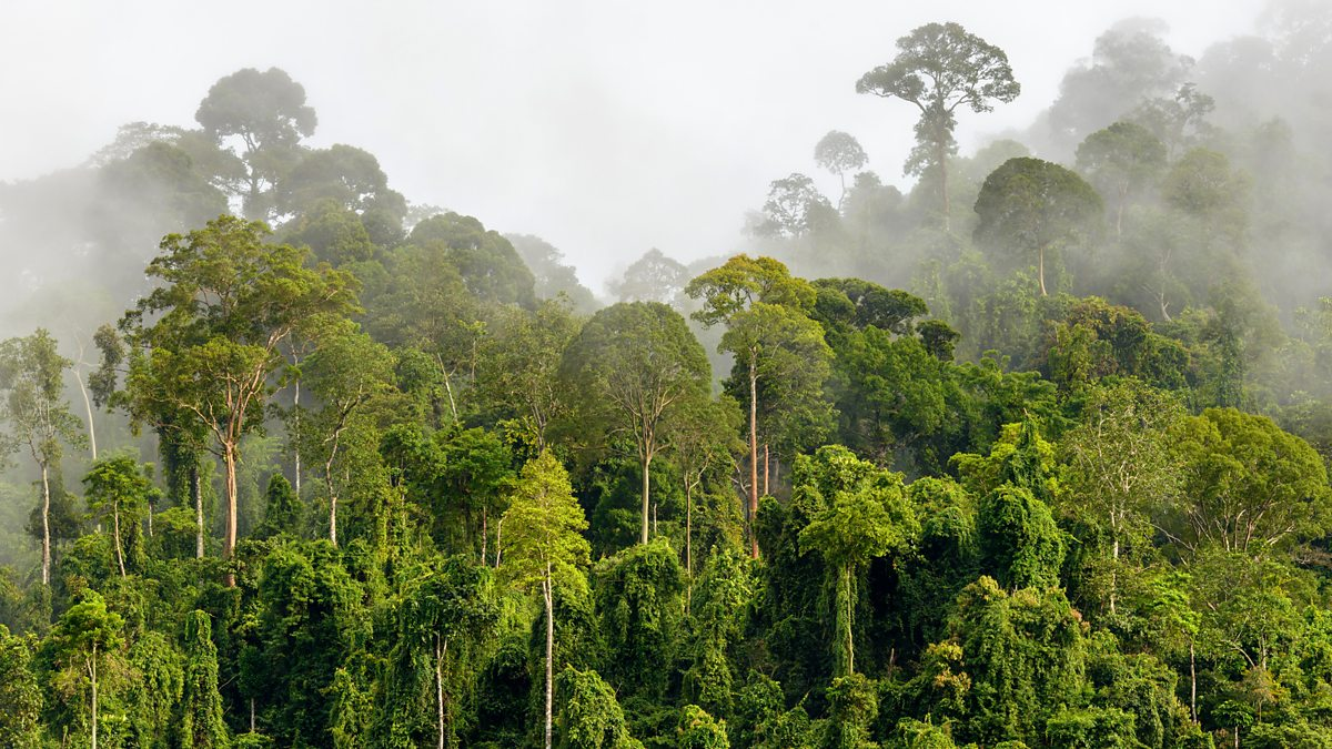 the importance of the tropical rainforests and results of forest destruction