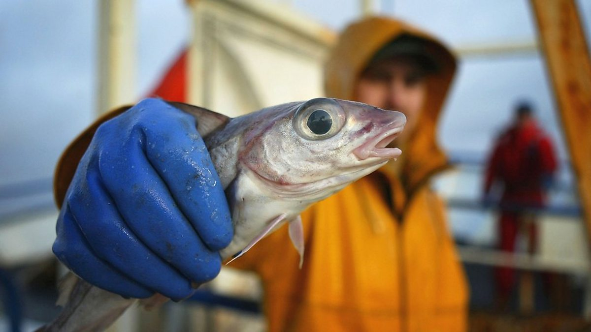 BBC World Service - Business Daily, Fishing in Europe