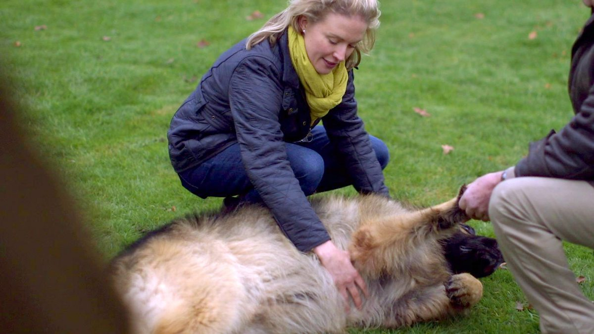 Bbc Two Trust Me I M A Vet Series 1 Episode 1 Animal