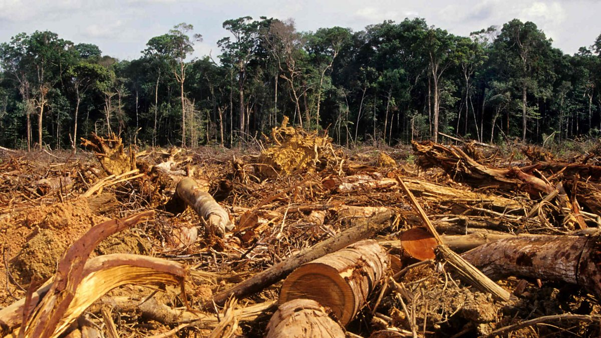 overgrazing over cultivation and deforestation Deforestation 1 shifting cultivation/slash and burn agriculture or jhum cultivation a patch of 5 other causes-mining, overgrazing, hydroelectric projects, large dams and reservoirs, laying down deforestation- degraded forests forests soil moisture- rain.