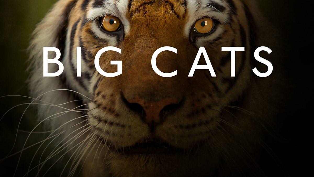 Most Intelligent Big Cats