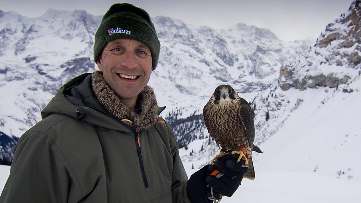 BBC Two - Natural World, 2018-2019, Super Fast Falcon, Super