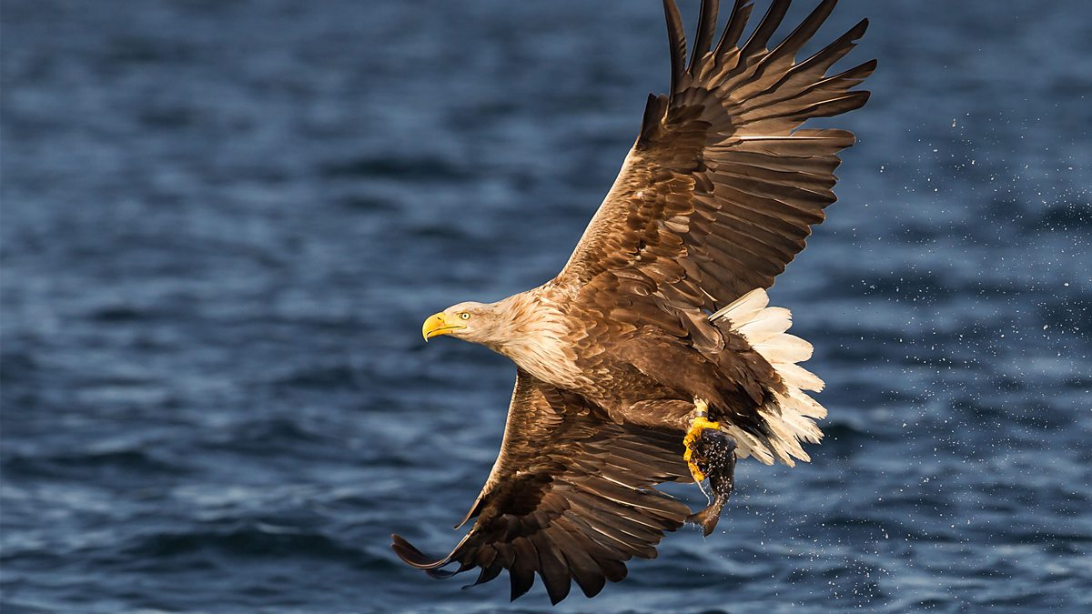 Turtle, Eagle, Cheetah: A Slow Odyssey - An Eagle's Flight