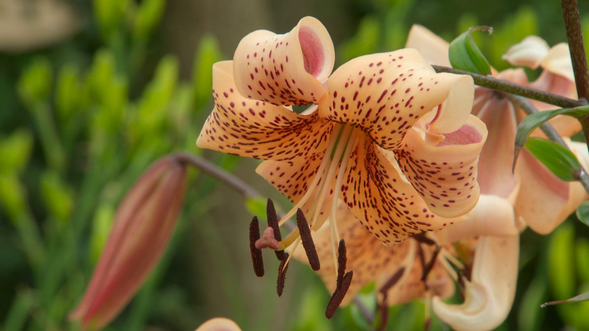 BBC iPlayer - Gardeners World - 2019: Episode 17