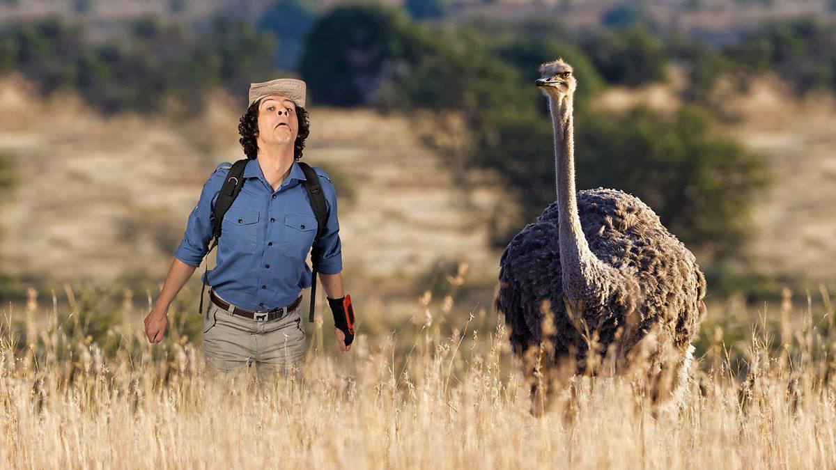 BBC iPlayer - Andys Wild Adventures - Series 1: 17. Ostriches