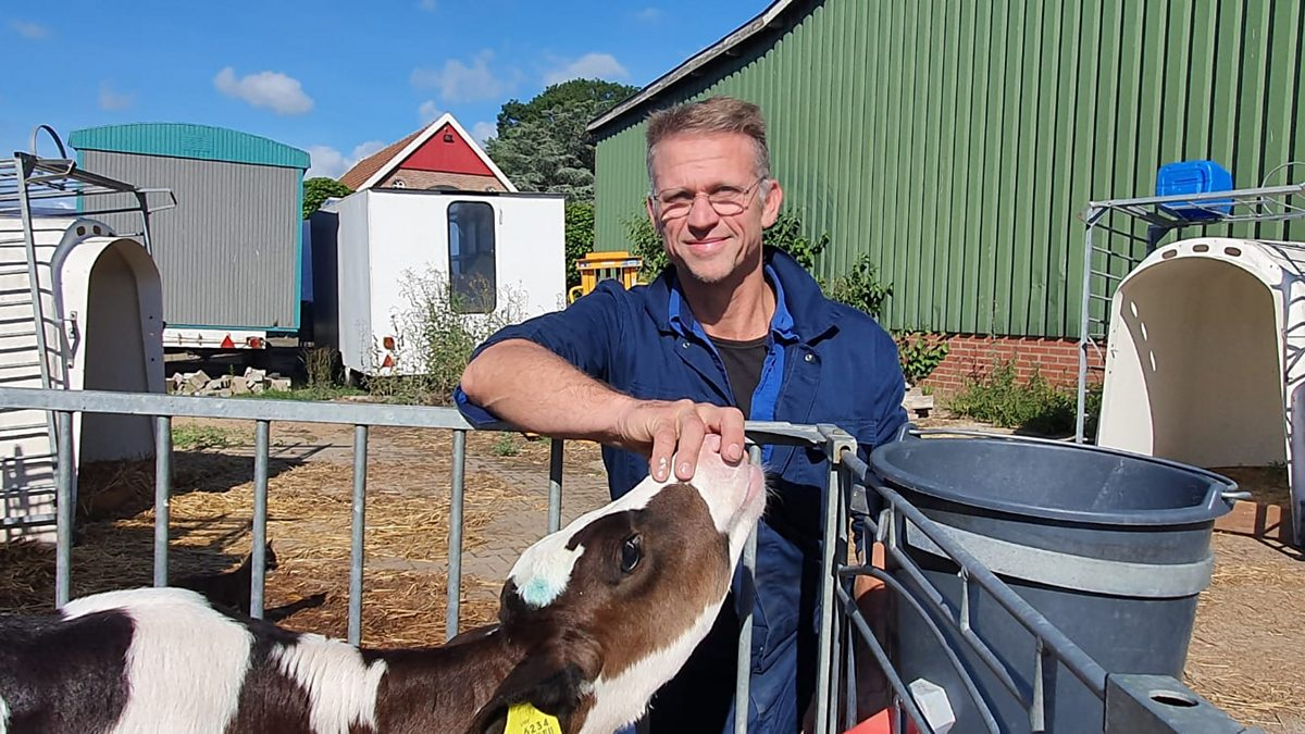 The trouble with Dutch cows thumbnail