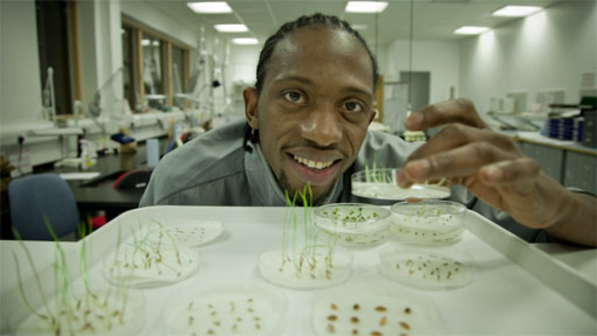 Bbc Class Clips Video Factors That Affect Germination Diagram Of Seed Http Leavingbionet Thestructure