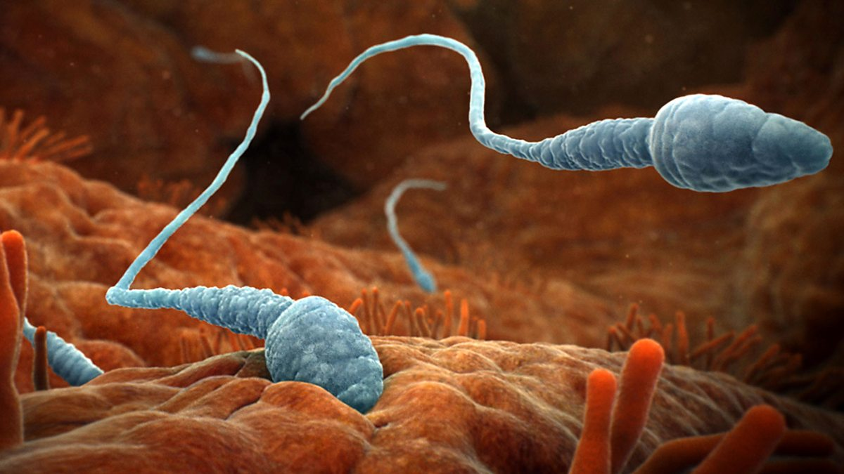 Sperma Inside