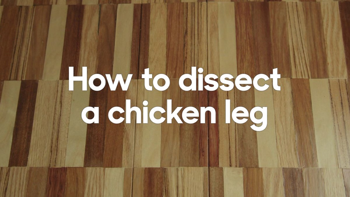 Bbc Bitesize How To Dissect A Chicken Leg Wing Muscles Diagram Labeled