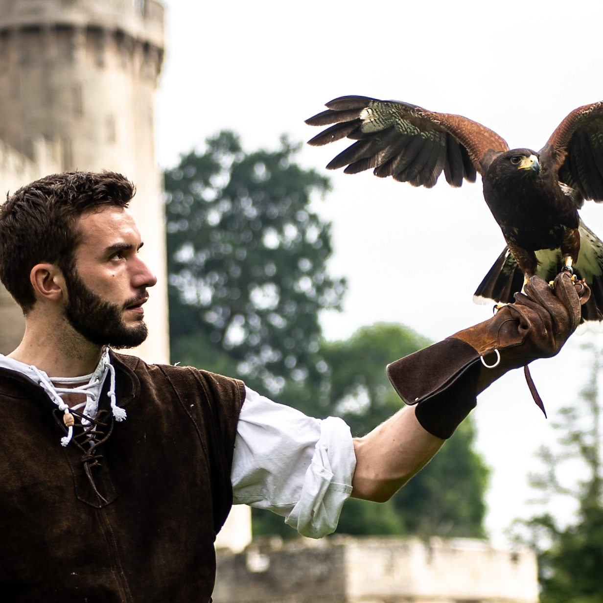 How Warwick Castle S Birds Of Prey Exercise In Lockdown Bbc News