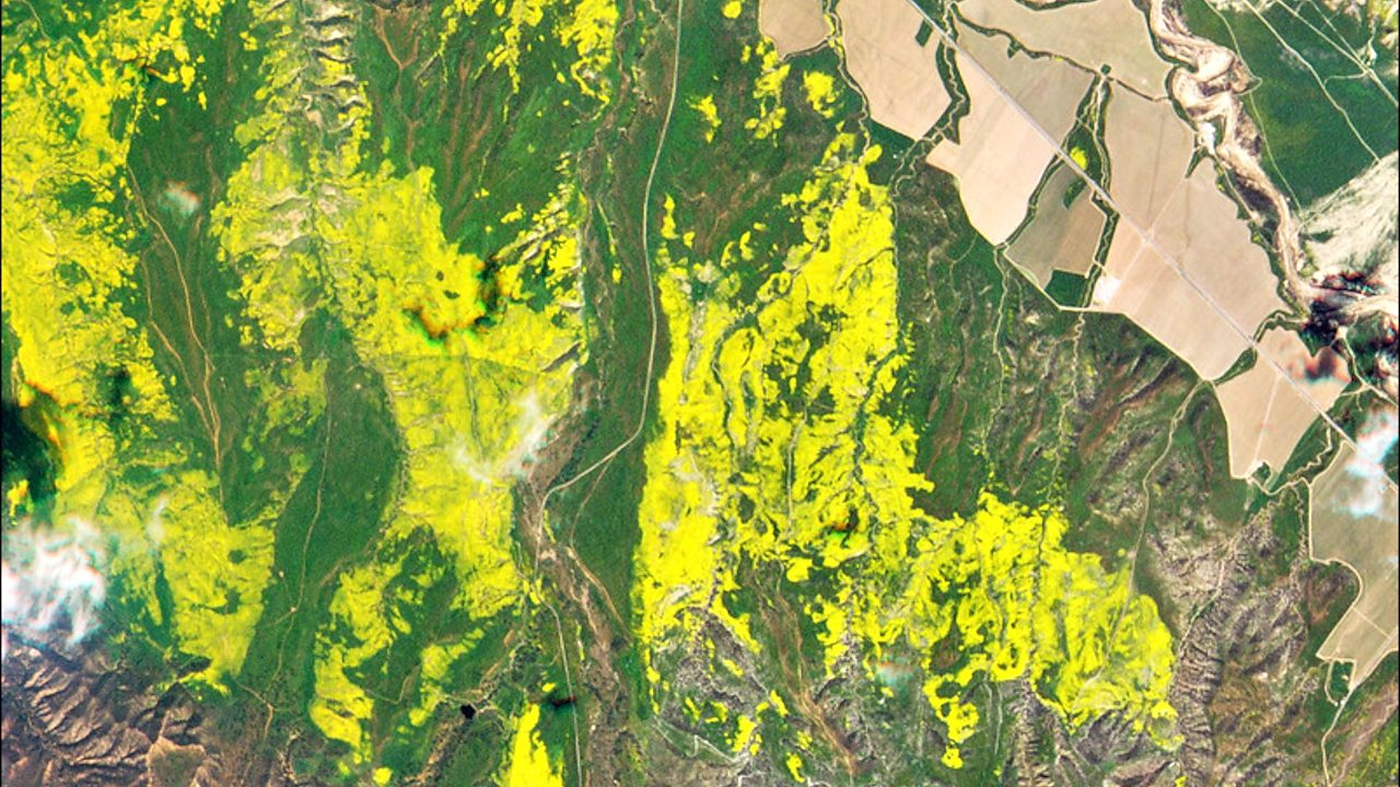 Wildflower 'super bloom' visible from space