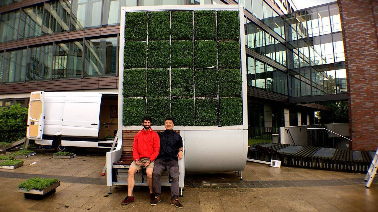 Unleashing the power of moss to clean cities