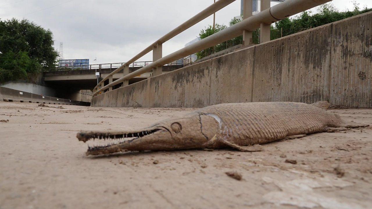 Houston flood: What Storm Harvey left behind