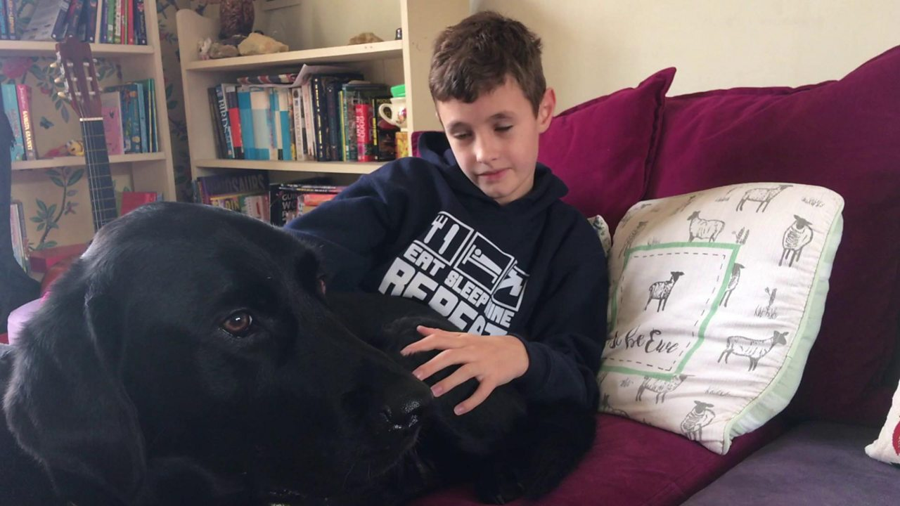 Autism assistance dog Rishi helps 11-year-old Jake