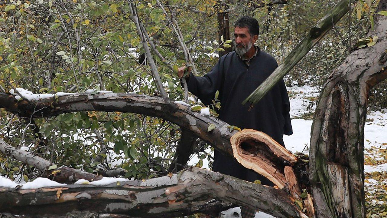 Why snow has brought despair to Kashmir's apple farmers