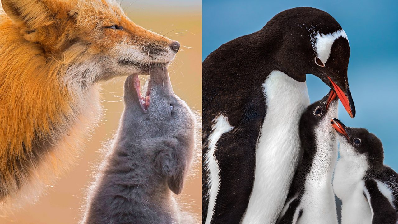 'Virtual safari': Wildlife photos from around the world