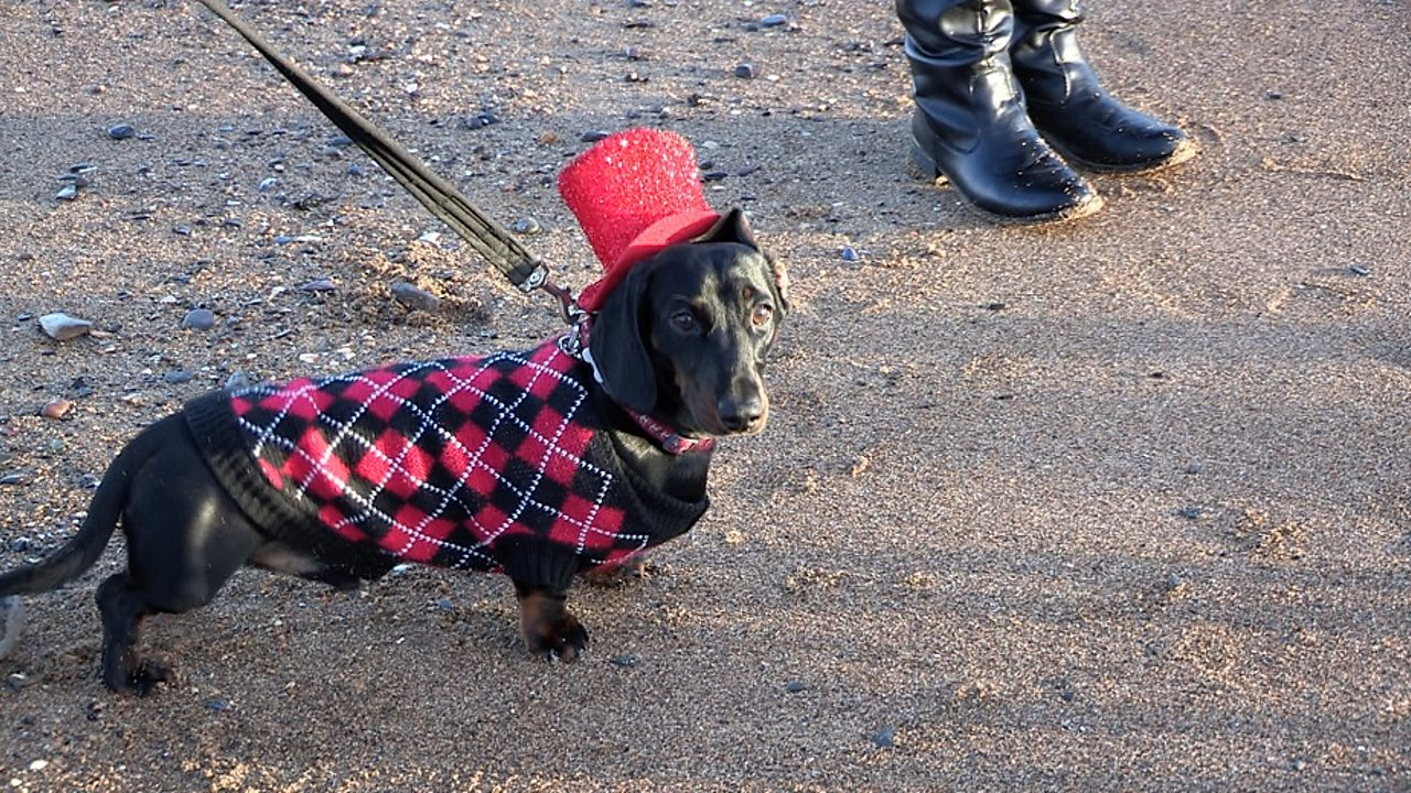 Why do people love dachshunds?