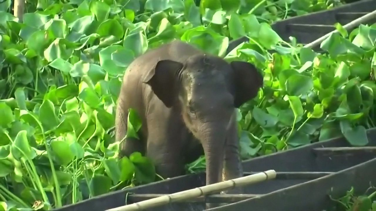 Stranded baby elephant rescued from lake