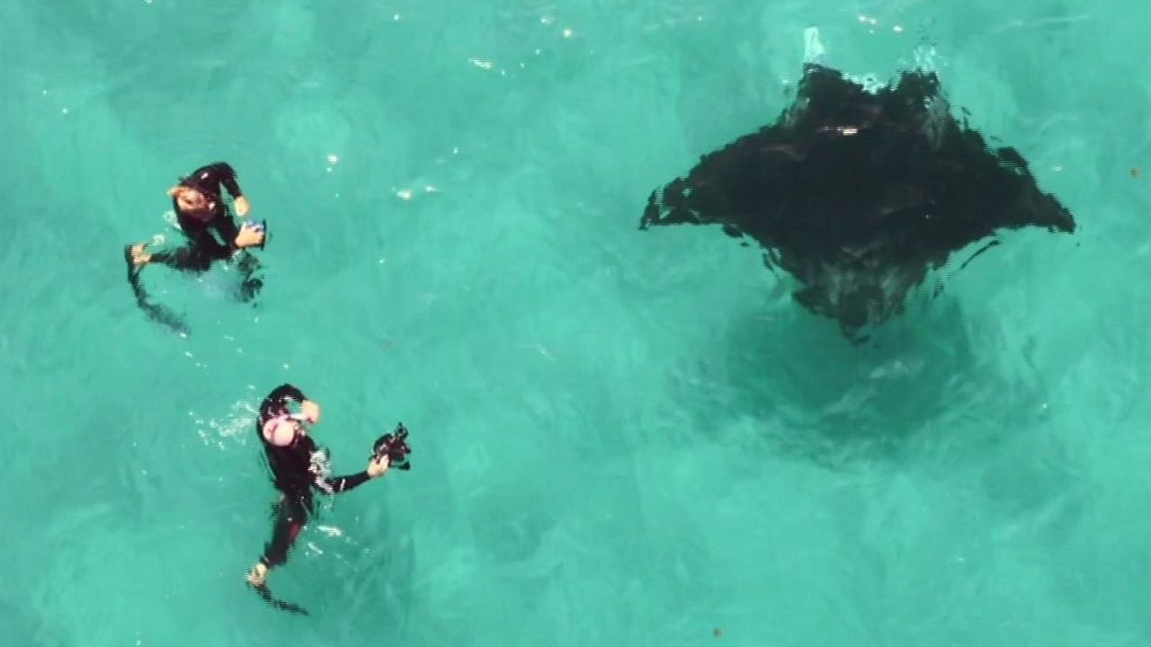 Manta ray in distress helped by divers