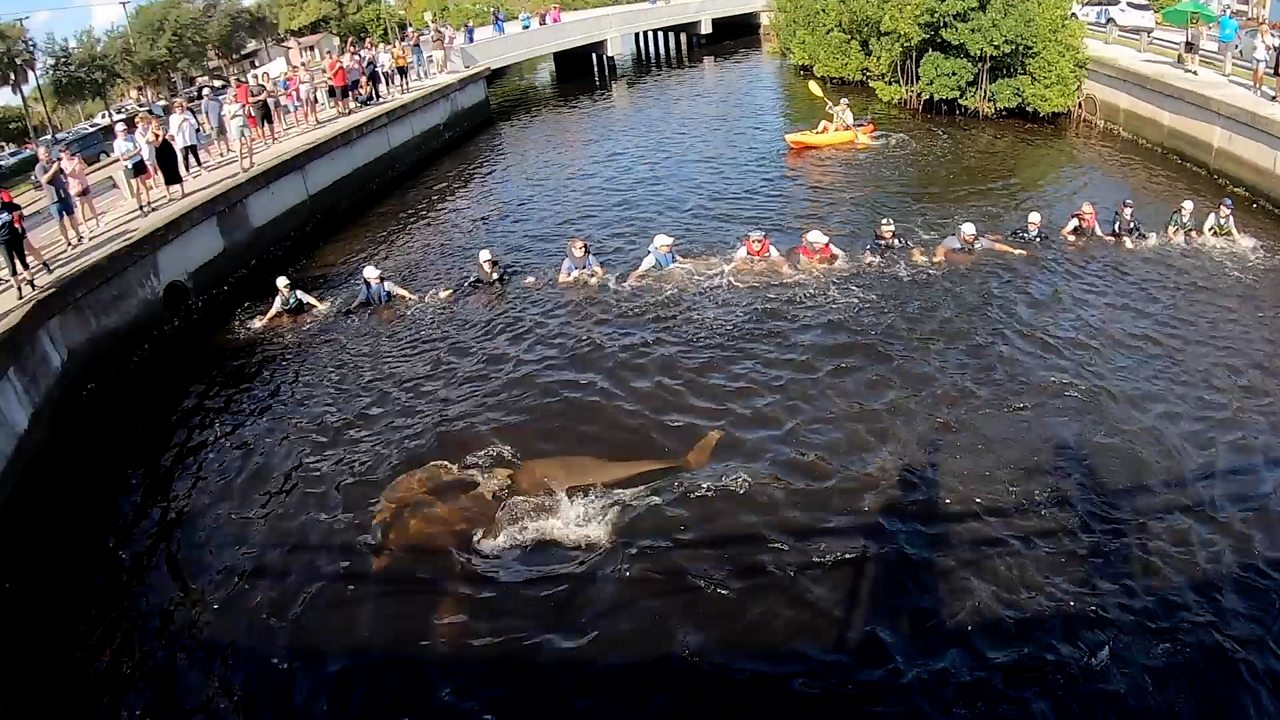 Human chain rescues stranded dolphins