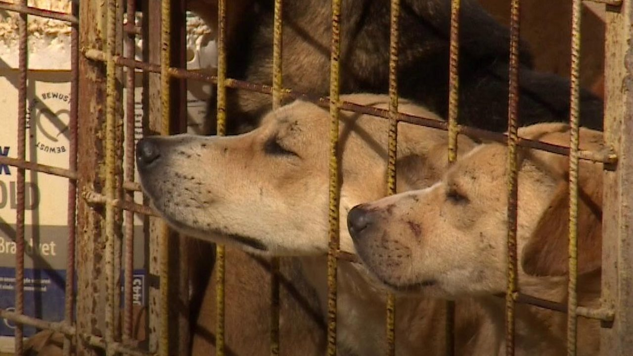 Meet the woman saving dogs from Romanian 'kill centres'