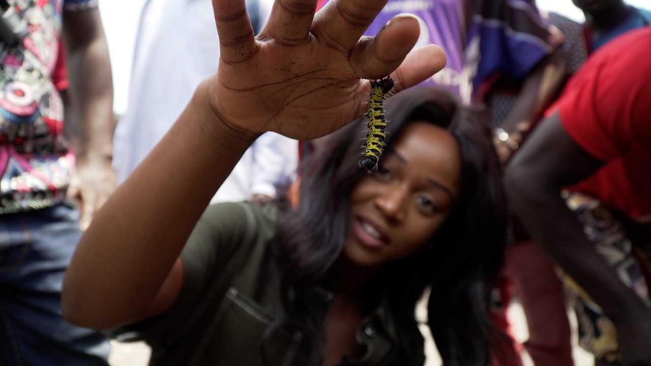 Eating insects: Testing out the delicacy in DR Congo