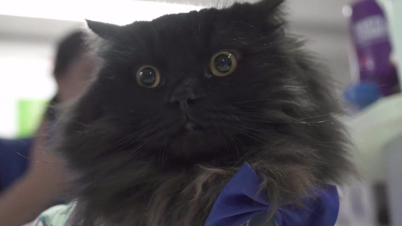 Mr London Meow: The therapy cat visiting hospitals