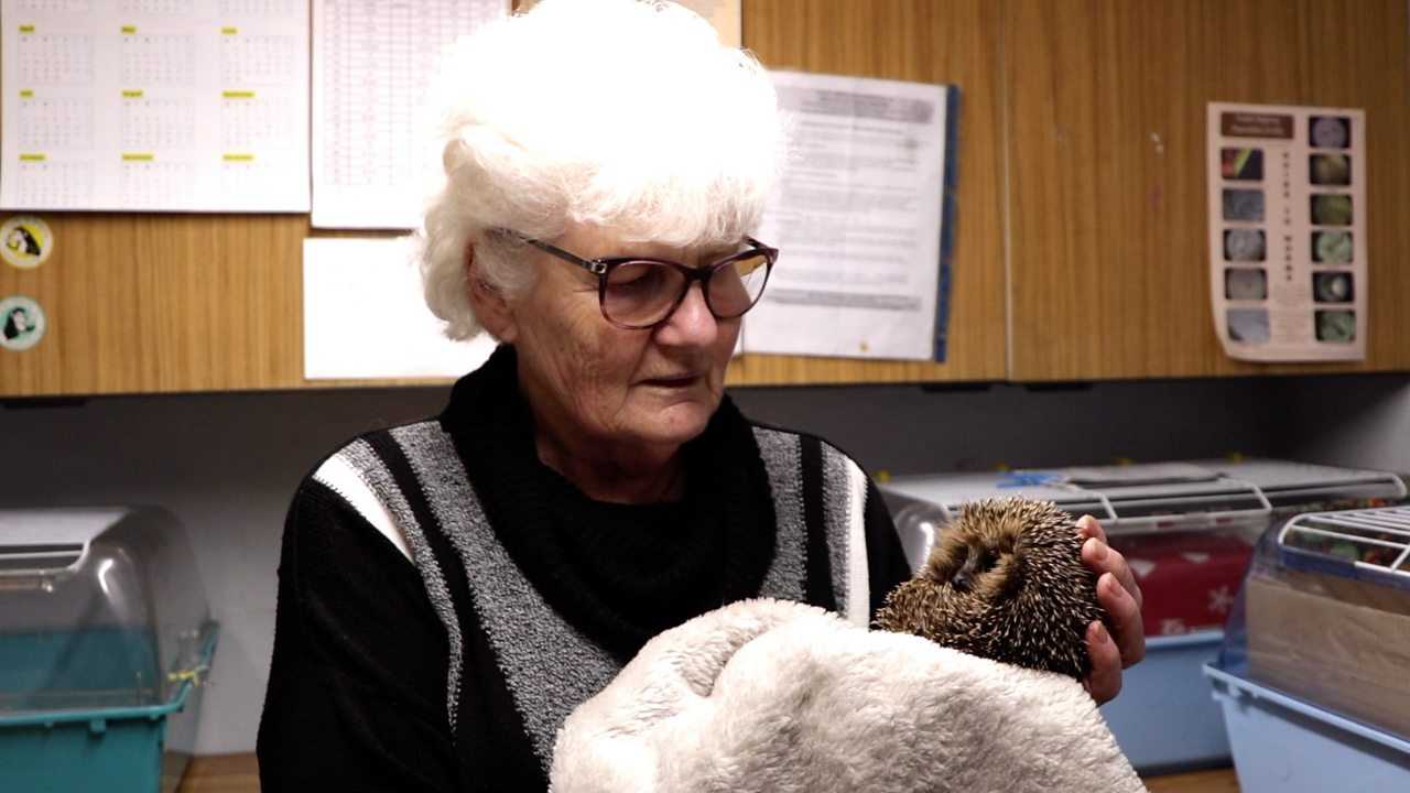 Portishead's Hedgehog Lady on the hunt for volunteers