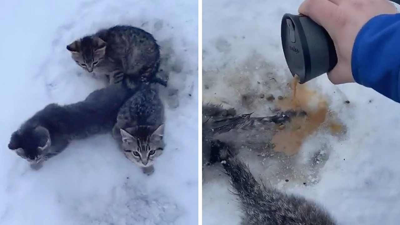 Man uses warm coffee to rescue kittens frozen to ground