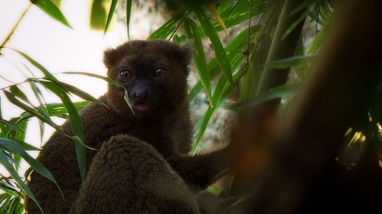 How deforestation in Madagascar is threatening animal habitats