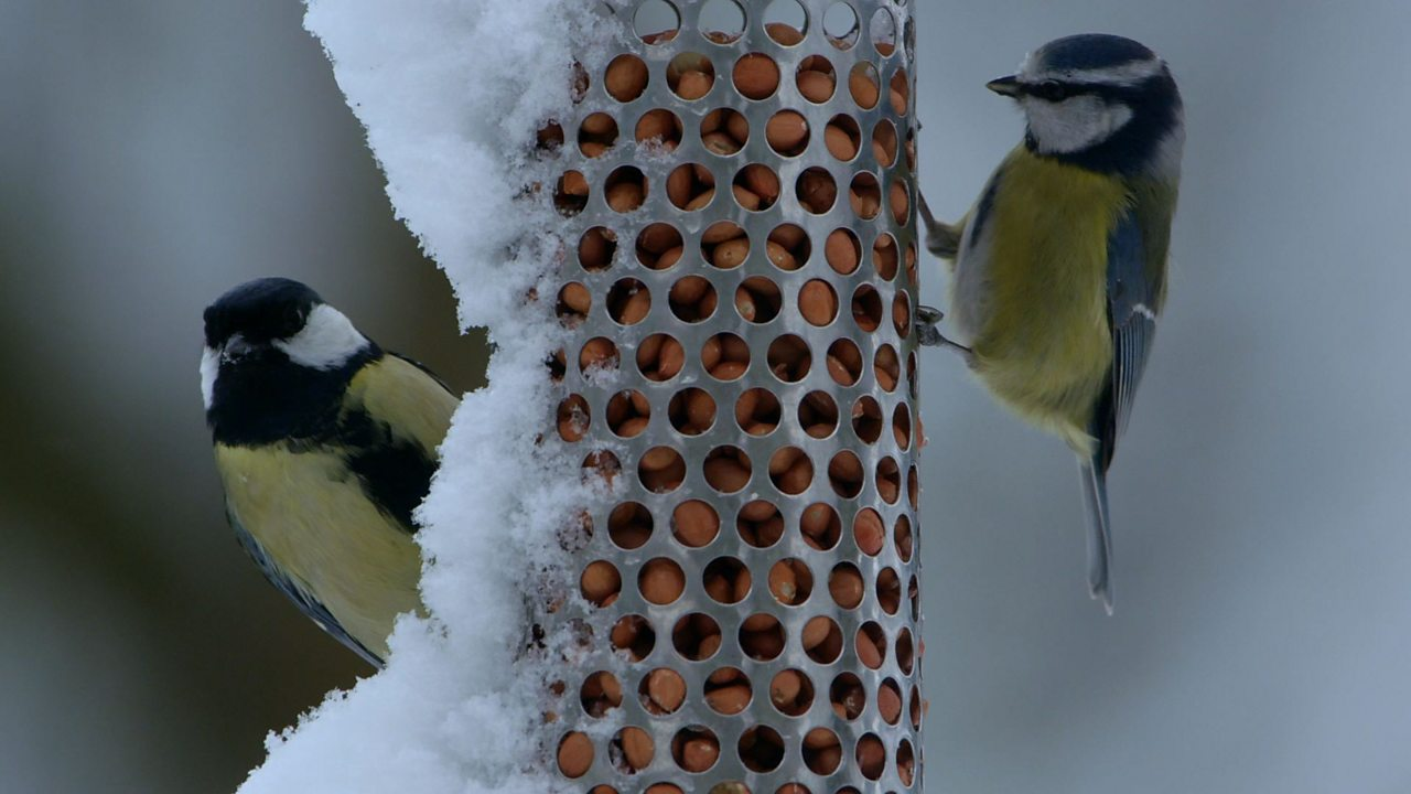 How winter weather affects the behaviour of British animals and plants