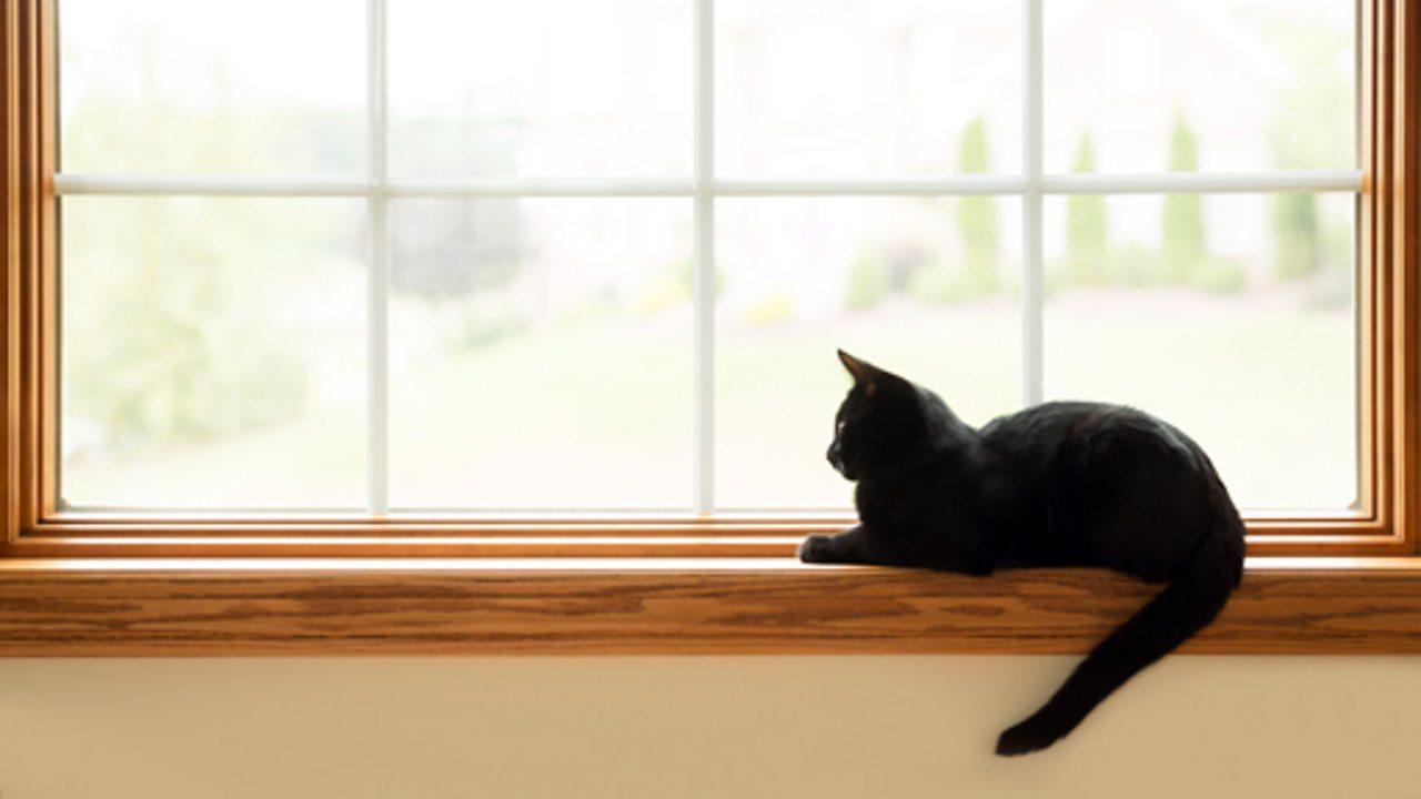 A cat sat on a windowsill