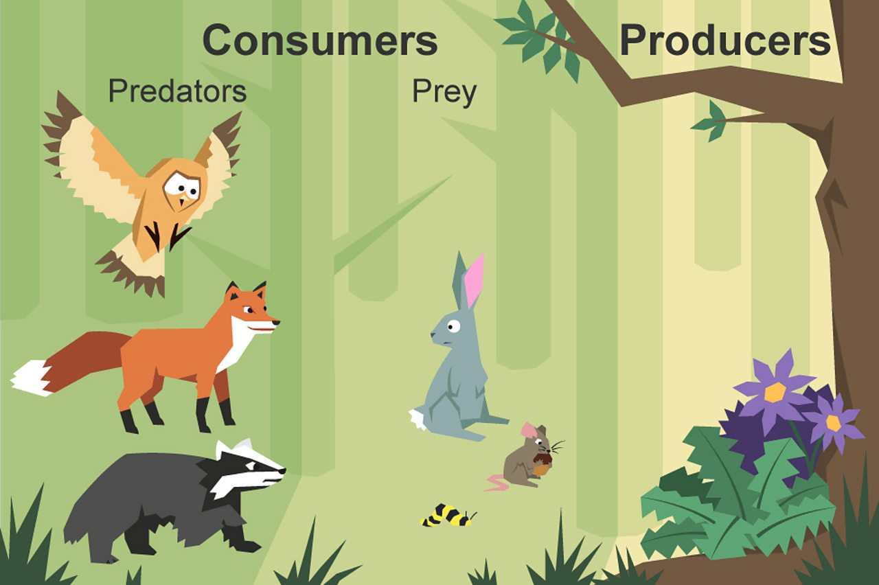 Image result for producers and consumers prey