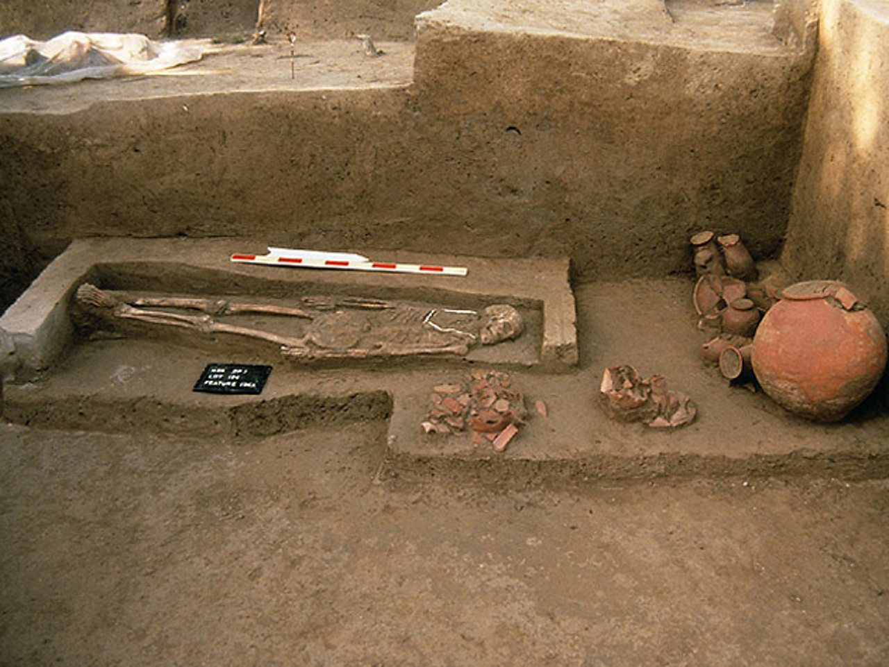 A skeleton and pottery found in the ruins of an Indus grave