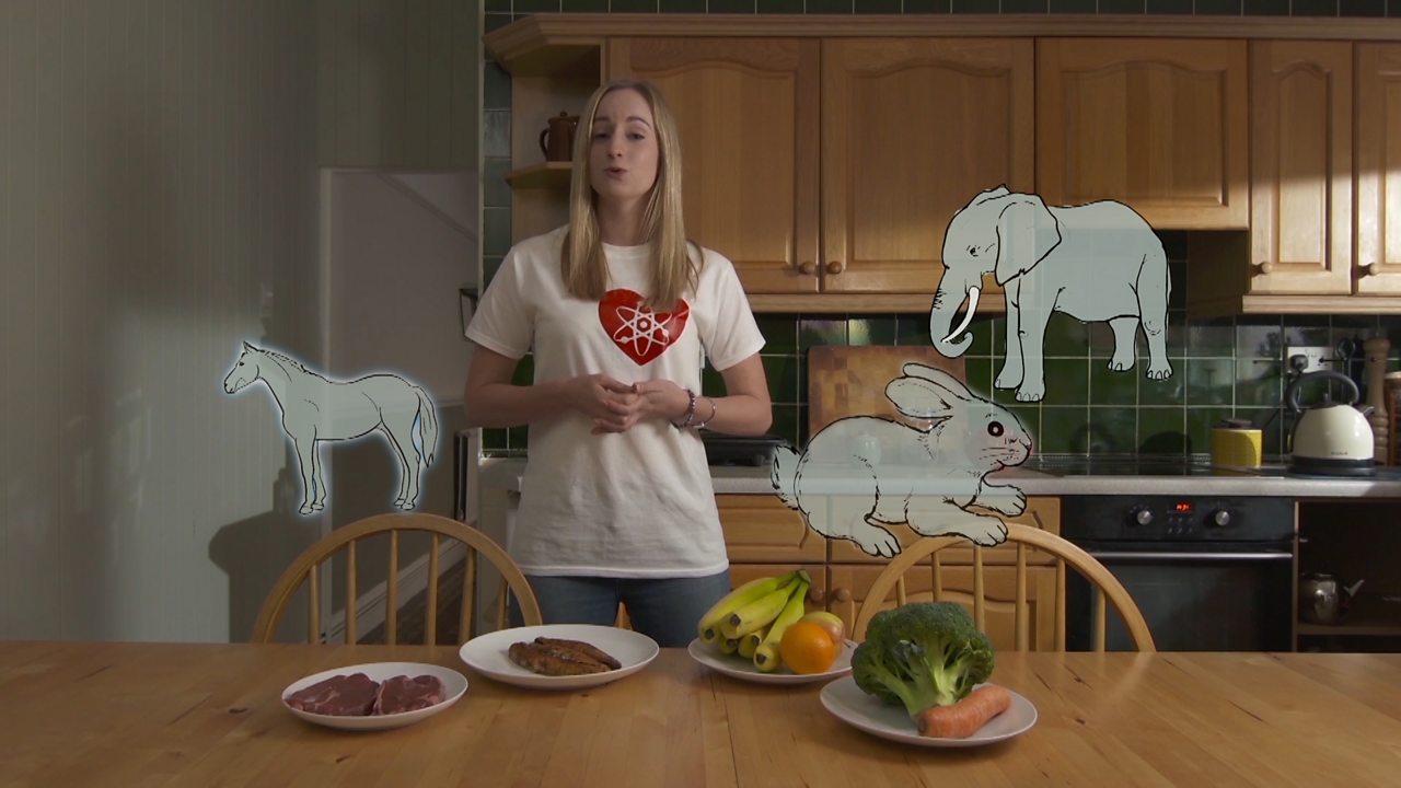 Teeth - how they help animals eat