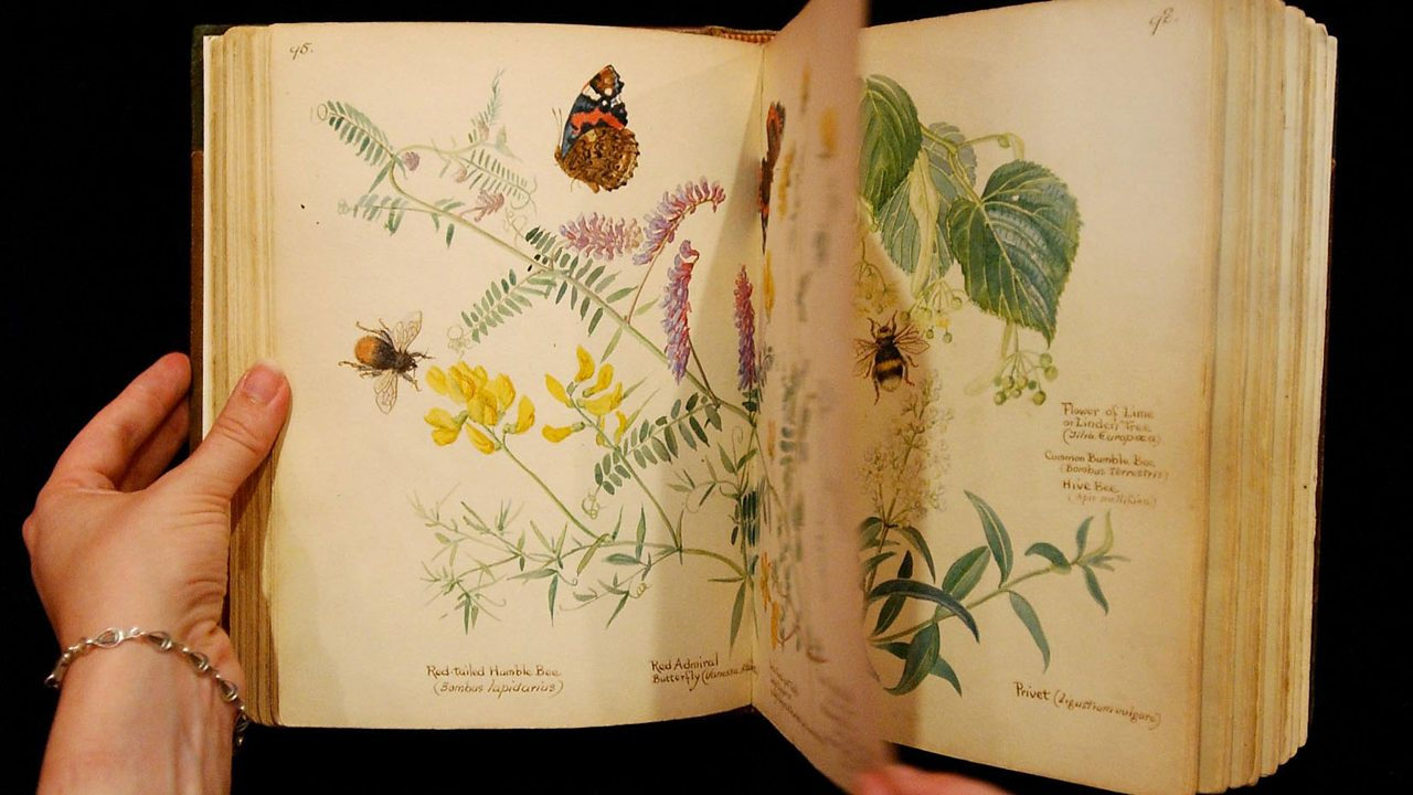 A page of illustrator Edith Holden diary: The Country Diary of an Edwardian Lady