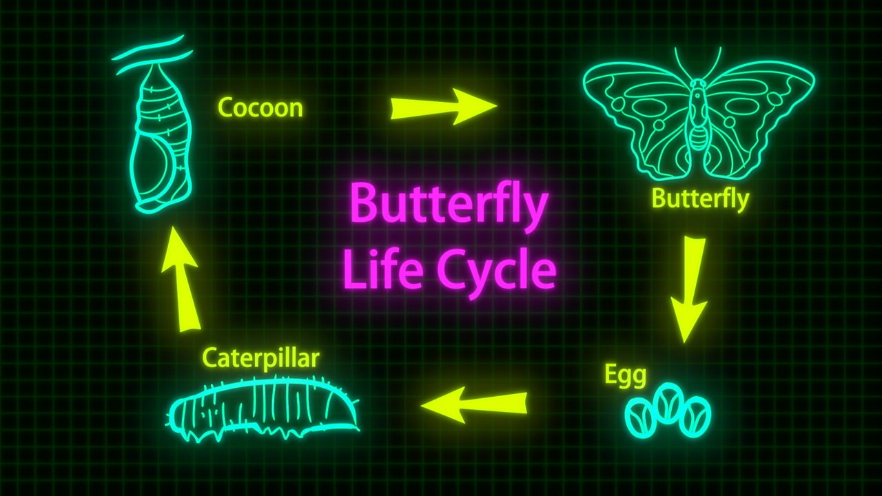 The life cycles of different organisms