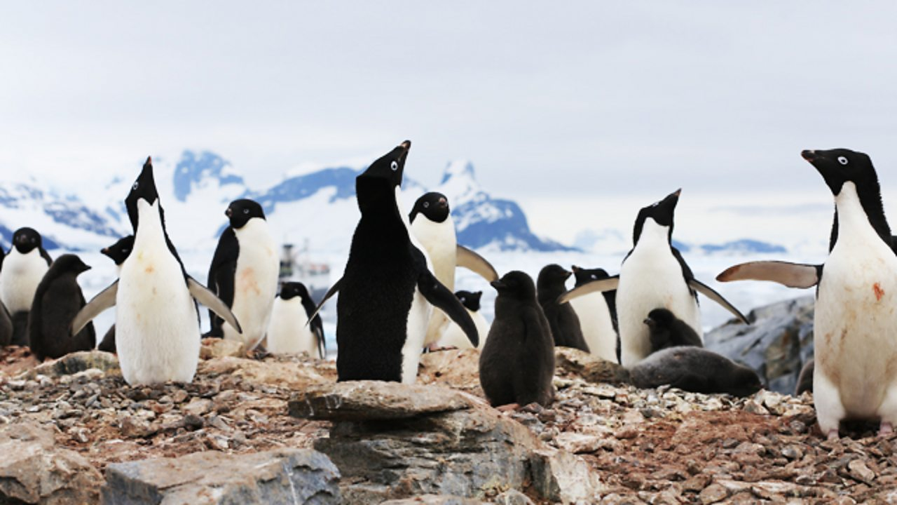 How climate change is affecting penguins and their habitat