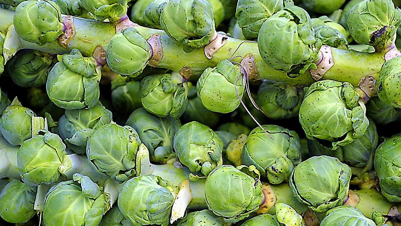 Why do some people not like Brussels sprouts...?