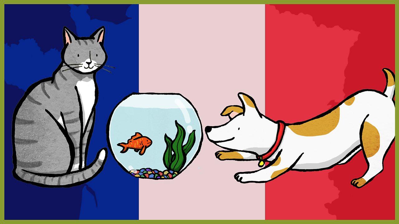 1. Les animaux et les couleurs