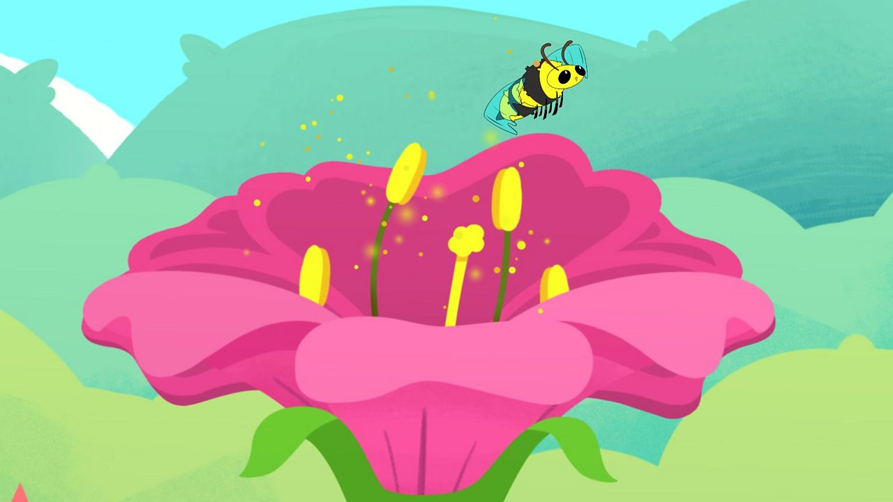 How do flowering plants reproduce?