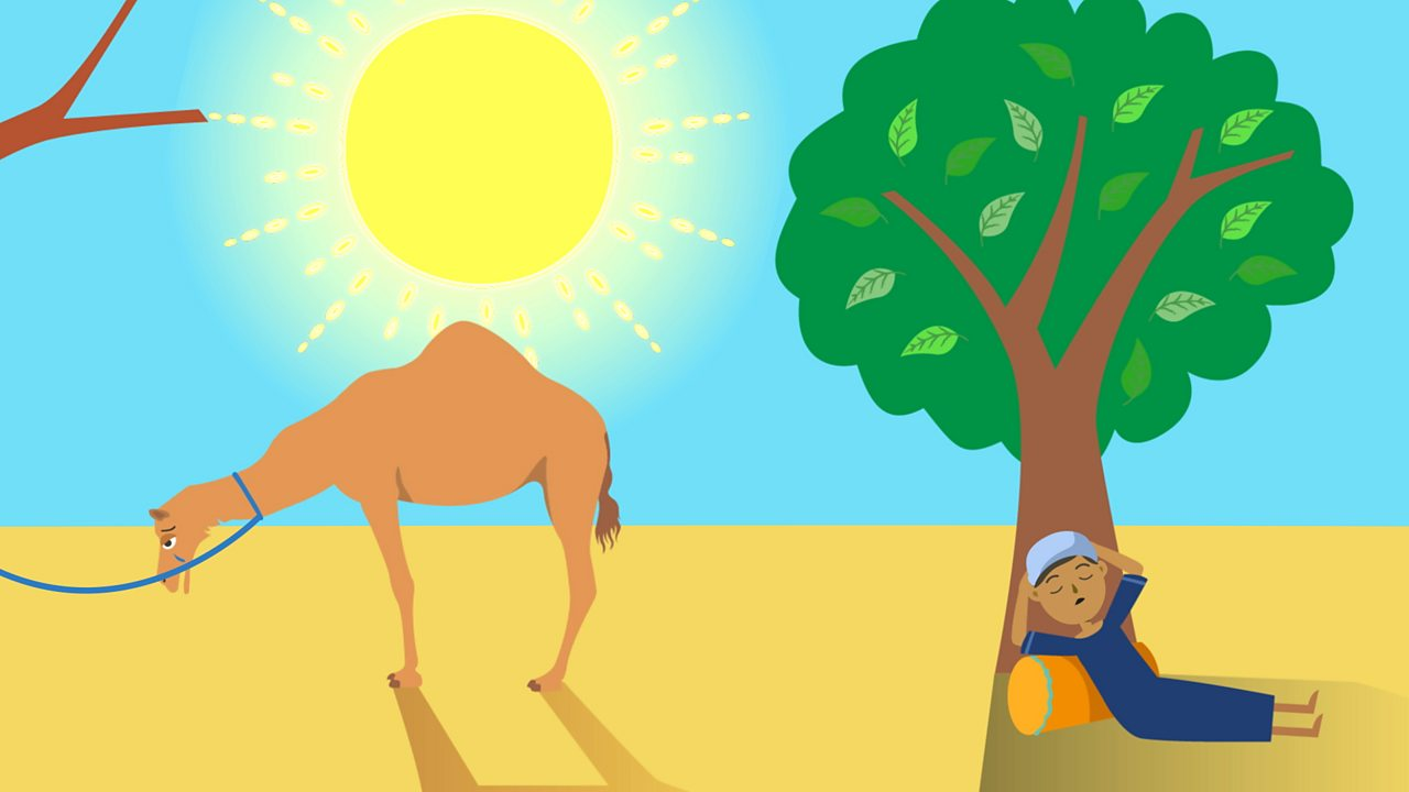 The Islamic Story of The Prophet and the Ants and 'The Crying Camel'