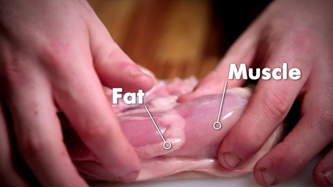 A brief diagram showing the fat and the muscle in a piece of chicken
