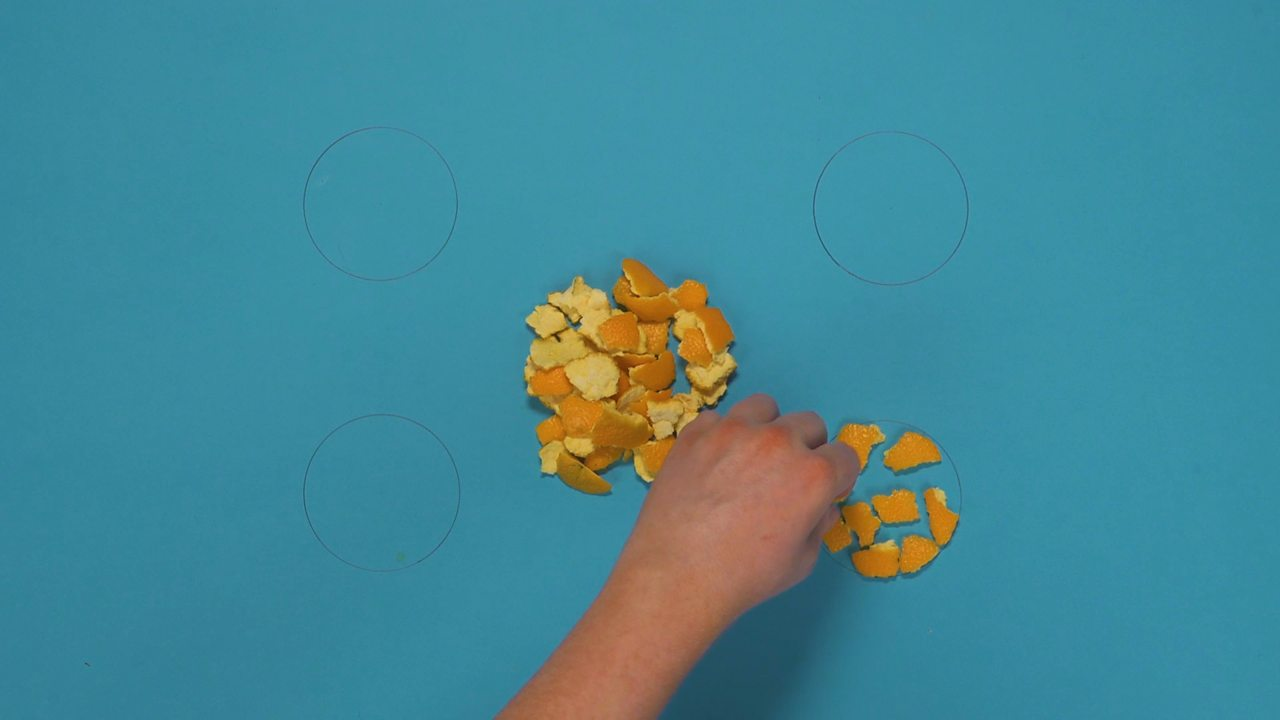 Fragments of orange peel being placed within the drawn in circle