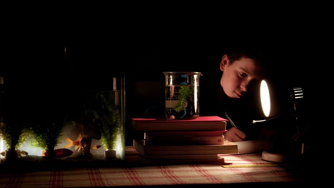 A student in a dark room, with a single light shining on a beaker filled with water and a plant, writing observations.