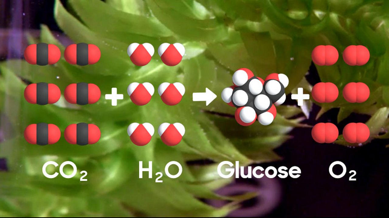 The photosynthesis equation pictured visually with 6 molecules of carbon dioxide being added to 6 molecules of water to give glucose and 6 molecules of oxygen.