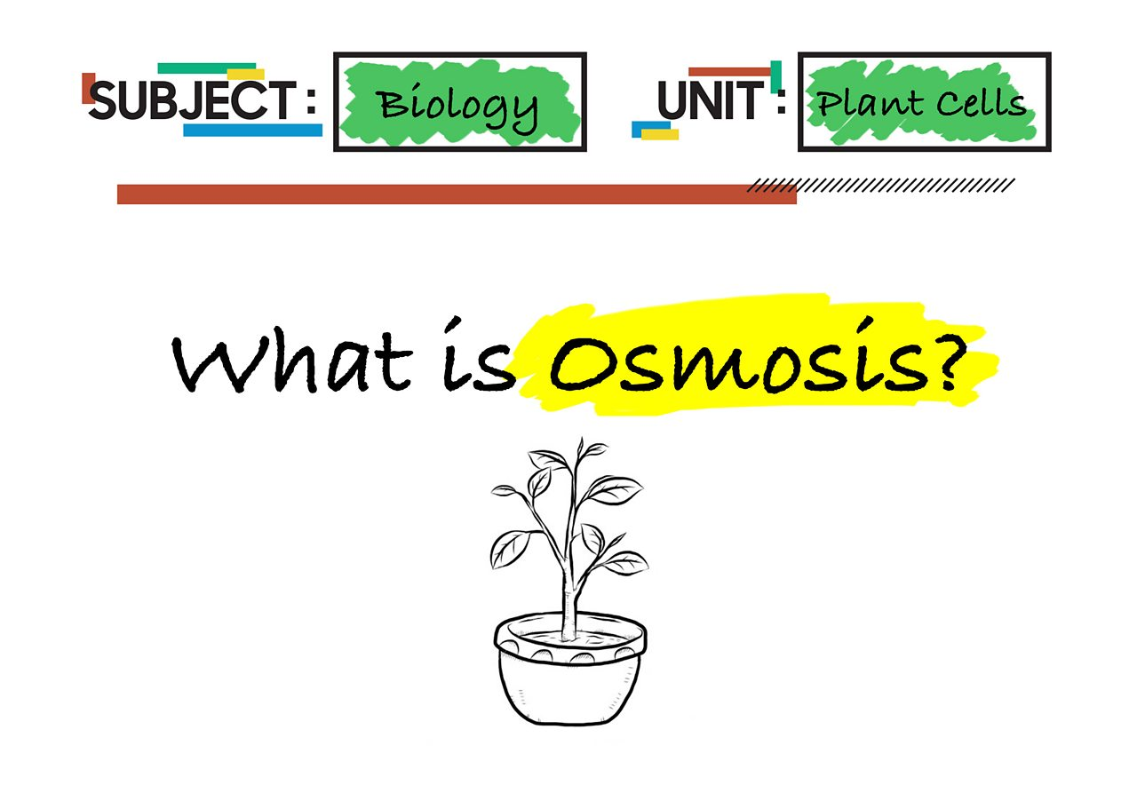 A flashcard saying What is Osmosis on it