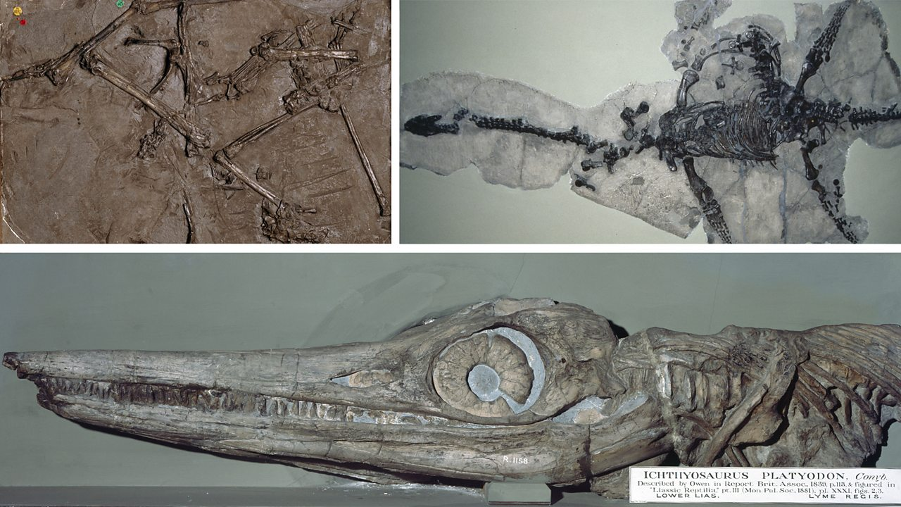 Fossils found by Mary Anning