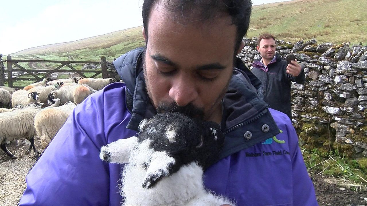 A Yorkshire farm offers asylum seekers taste of a new life