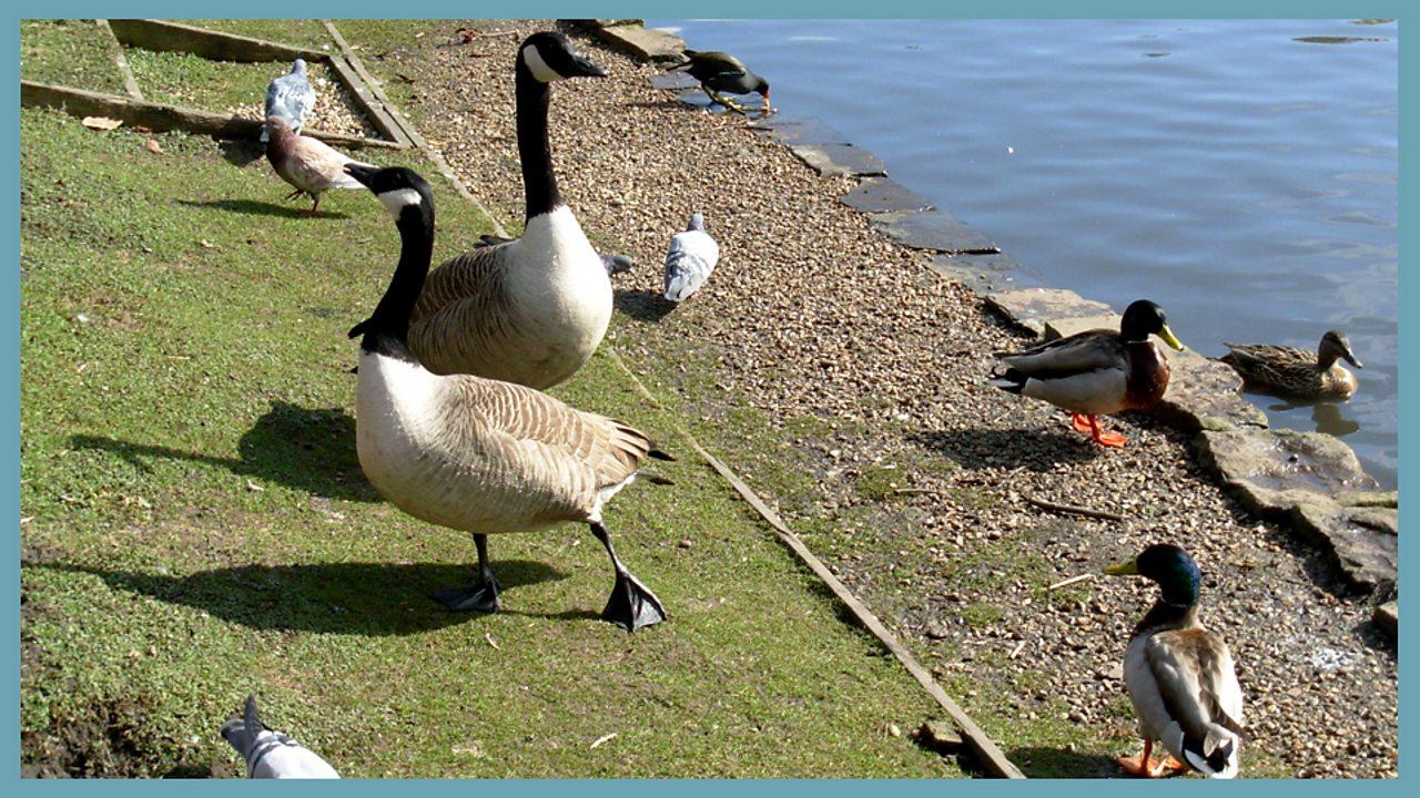 5. Animals and habitats